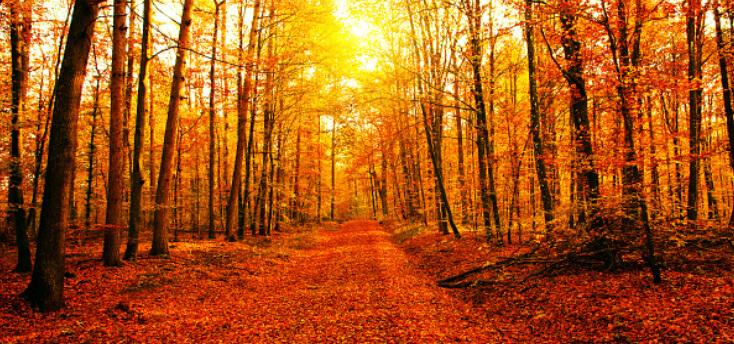 5-autumn-safety-tips-for-seniors1