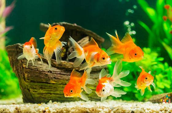 Try Watching Fish In An Aquarium