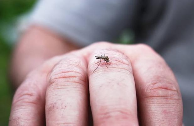 Backyard Pests beware of backyard pests: how to keep mosquitoes away