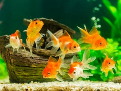 Feeling Down? Try Watching Fish in an Aquarium