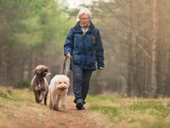 Tips for Seniors Considering Dog Ownership